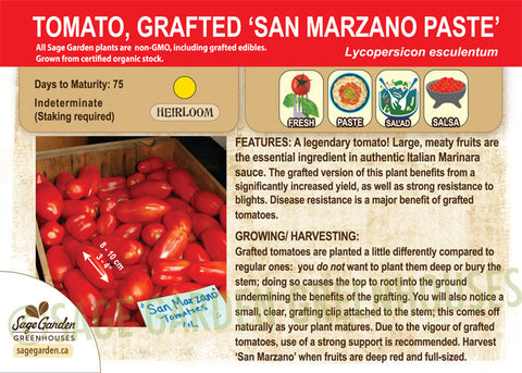 Grafted San Marzano Tomato at Sage Garden