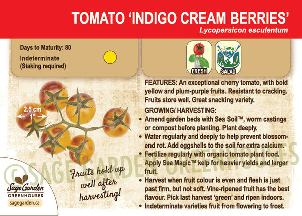 Indigo Gold Berries Tomato (synonym for Indigo Cream Berries)