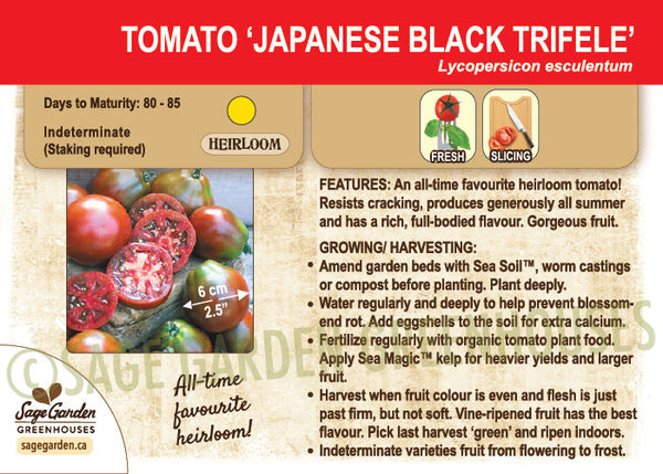 Japanese Black Trifele Tomato at Sage Garden