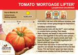 Tomato, Mortgage Lifter  (Live Plant)