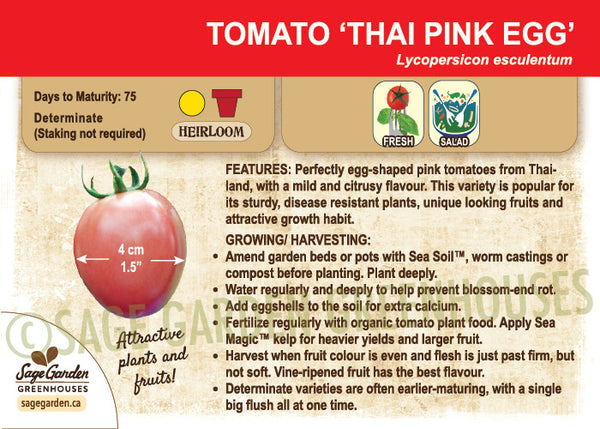 Thai Pink Egg Tomato at Sage Garden