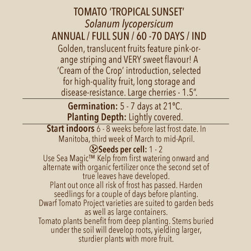 Seeds - Tomato, Cream of the Crop Tropical Sunset OG