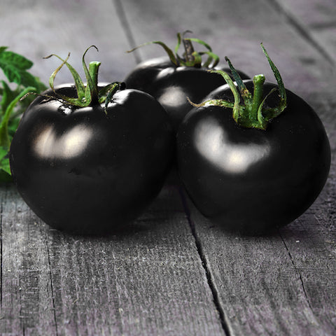 Live Plant - Tomato, Black Beauty