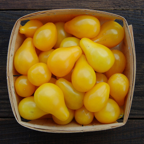 Organic Yellow Pear Tomato