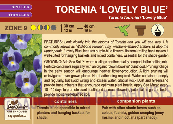 Torenia 'Lovely Blue' (Live Plant)