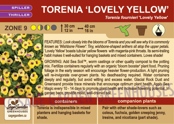 Torenia 'Lovely Yellow' (Live Plant)