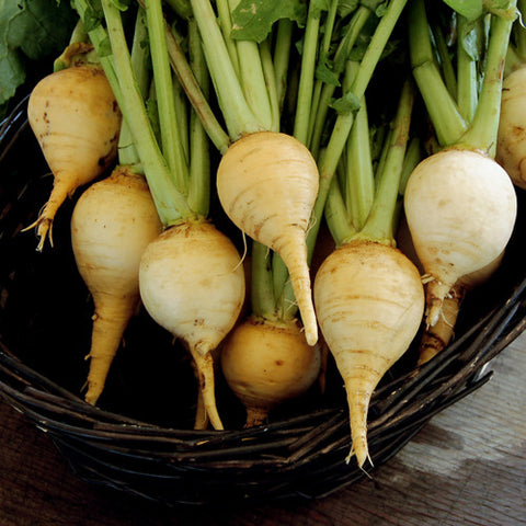 Organic Golden Ball Turnip