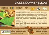 Violet, Downy Yellow (Live Plant)