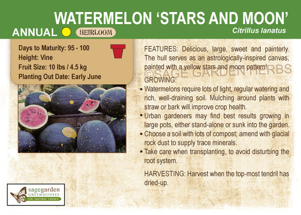 Watermelon 'Stars and Moon' (Live Plant)