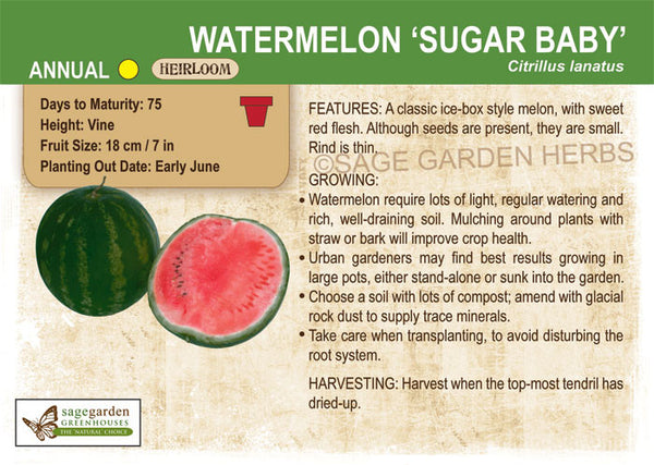 Watermelon 'Sugar Baby' (Live Plant)