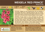Weigela 'Red Prince' (Live Plant)