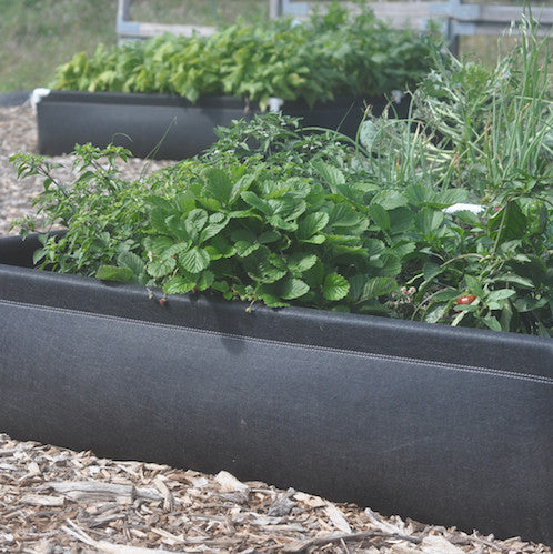 Geoplanter Raised Bed