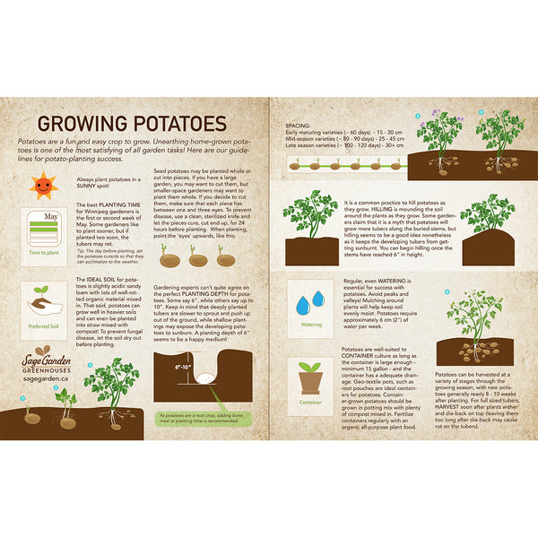 how to plant organic seed potatoes by Sage Garden