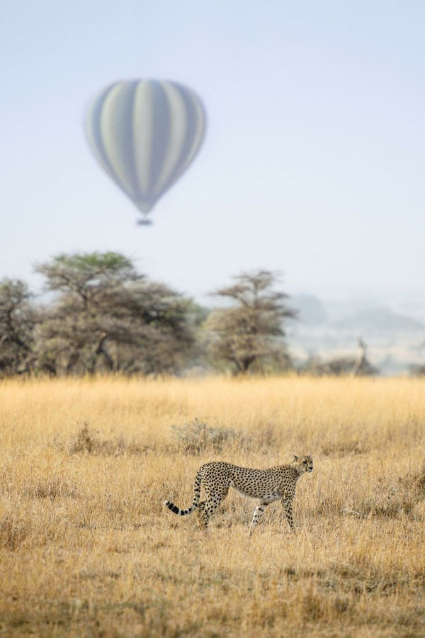 Take A Breathtaking Trip To Tanzania