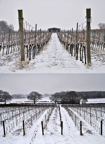 Snowy English Vineyard - Woodchurch, Kent