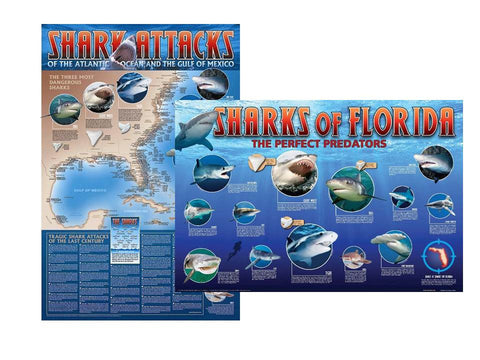 Shark Attacks of the Atlantic and Eastern Gulf of Mexico