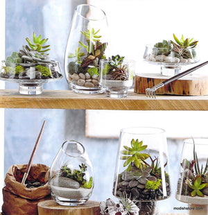 Roost Modern Glass Angle Footed Terrariums