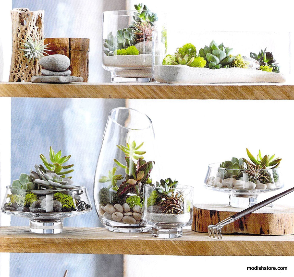 Roost Modern Glass Low Footed Terrariums