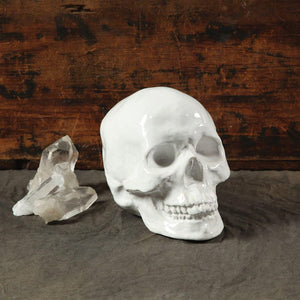 HomArt Ceramic Skull - White - Set of 4
