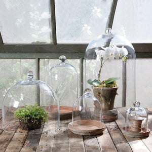 HomArt Glass Dome - Mini - Clear - Set of 4