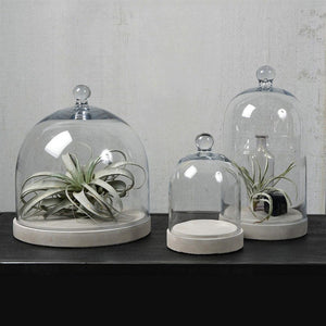 HomArt Glass Dome - Clear