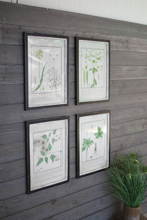 Kalalou Set Of 4 Framed Dandelion Prints Under Glass