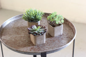 Kalalou Small Artificial Succulents In Square Pots -  Set Of 3
