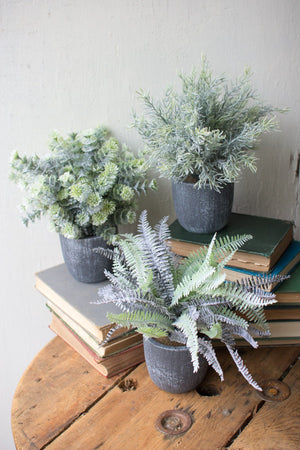 Kalalou Fern Succulents With Round Grey Pots - Set Of 3