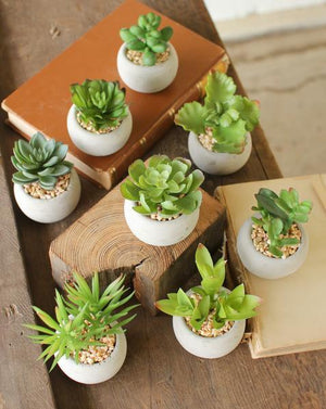 Kalalou Set Of 8 Small Succulents With Round Grey Pot