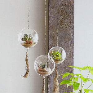 Roost Orbus Hanging Terrariums - Set Of 3