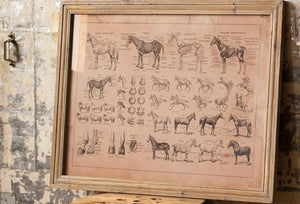 Kalalou French Equine Anatomy Chart Under Glass