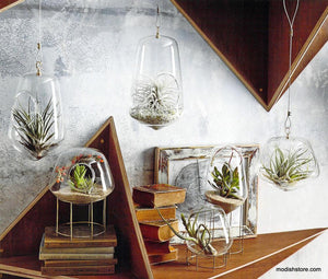Roost Igloo Terrariums