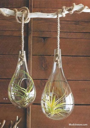 Roost Recycled Glass Bubble Hanging Terrariums