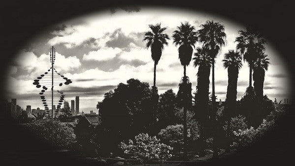 Palms of Dolores Park