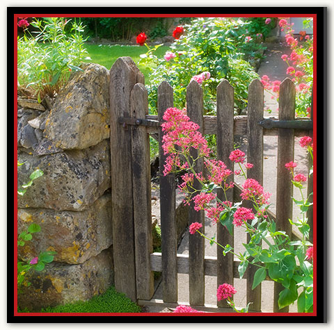 10d-122 Cottage Rose_04-Red