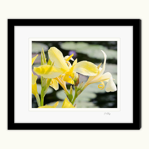 05c-245 Lily Yellow-tp