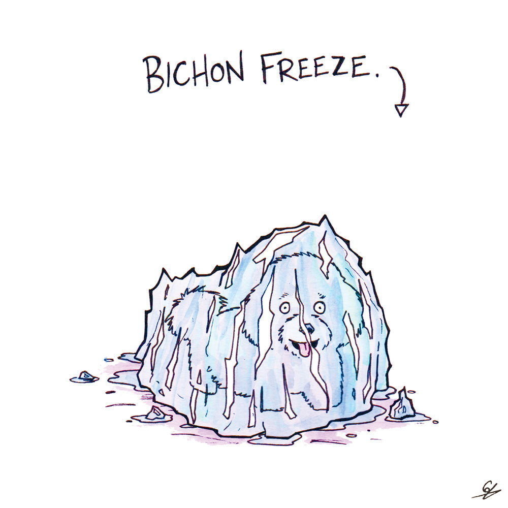 It's a Bichon Freeze. - A Bichon Frise in a block of ice.