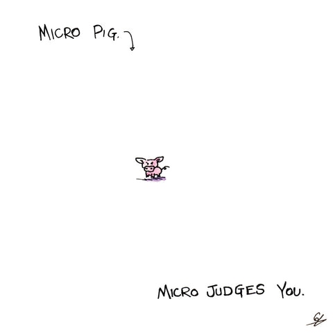 Micro Pig micro judges you