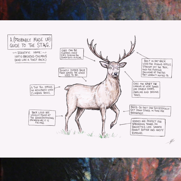A (Probably Made Up) Guide To The Stag - A3 Print