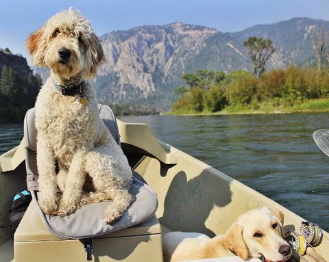 two dogs in a boat on a mountain lake