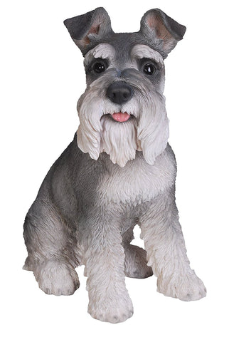 Miniature Schnauzer from Vivid Arts Real Life Dogs