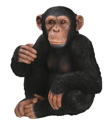 Sitting Chimpanzee