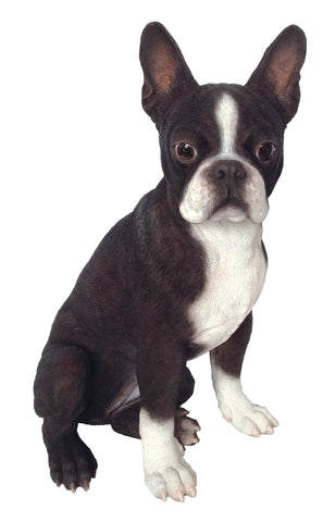 Boston Terrier - Vivid Arts Real Life Dogs Collection