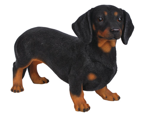 Dachshund from Vivid Arts Real Life Dogs Collection
