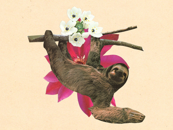 Your Moment of Sloth