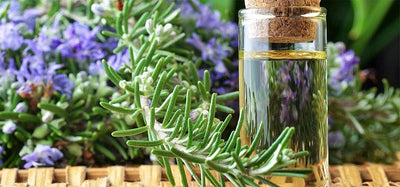 Facts About Rosemary Essential Oils