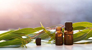 Facts about Eucalyptus Essential Oils