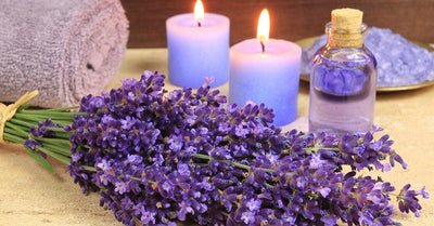 Interesting Facts about Lavender Essential Oil