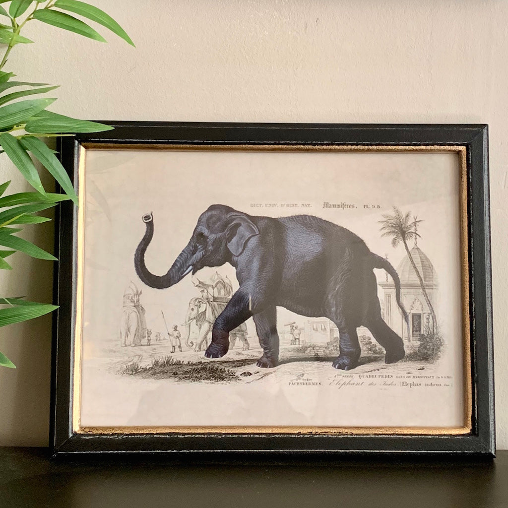 Framed Elephant Safari Print