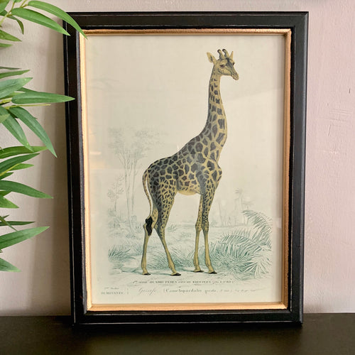 Framed Giraffe Safari Print